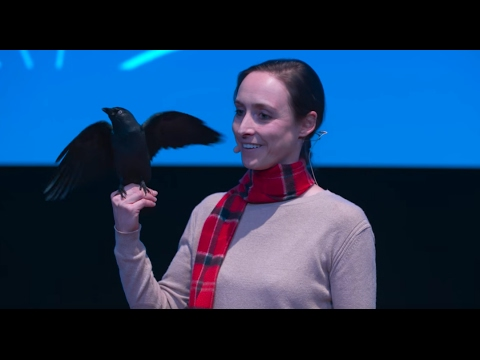 The fascinating intelligence of birds | Auguste von Bayern | TEDxTUM